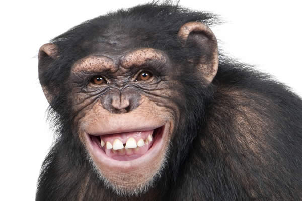 チンパンジー チンパン