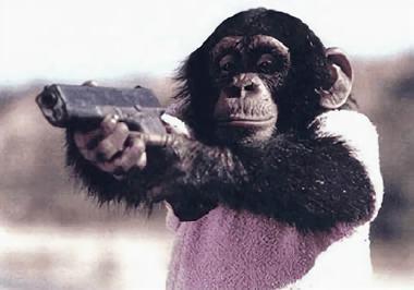写真 銃を構えるチンパンジー