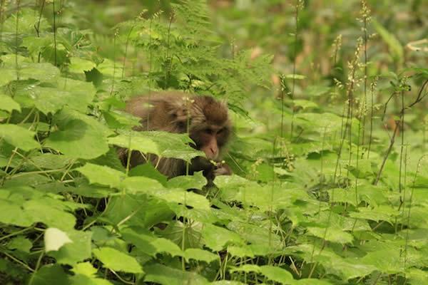 写真 草むらのお猿さん