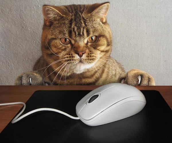 マウス 猫