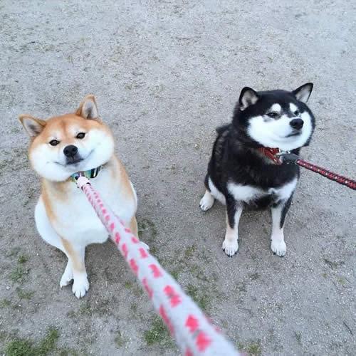 写真 みほ(犬) まほ(犬) 嫌がる