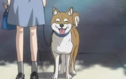 【ガルパン】西住家の犬にのみ許される行為www