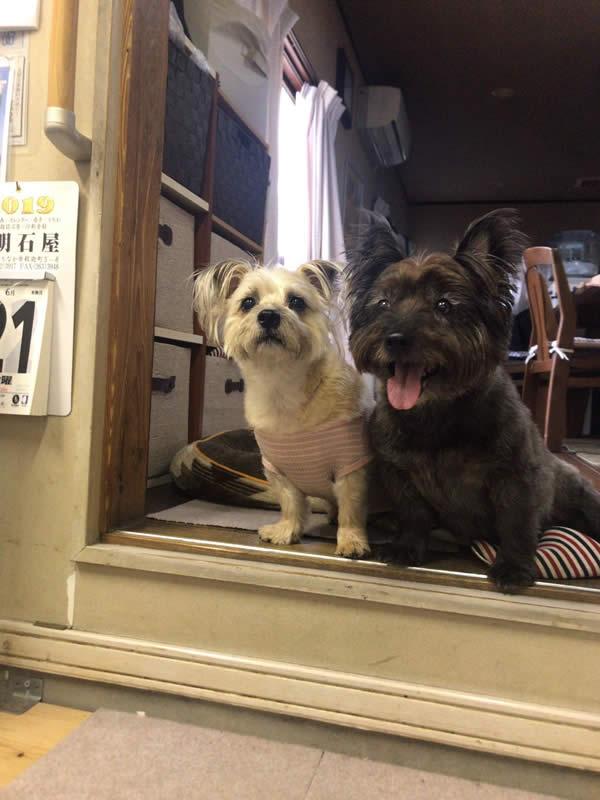 ガールズ&パンツァー 河嶋家の犬のモデル コチビ ノエル