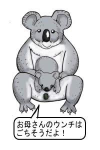 コアラ 子供 ウンチ ごちそう