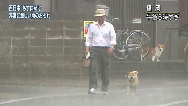 土砂降りの雨の中犬の散歩をしているおじさん